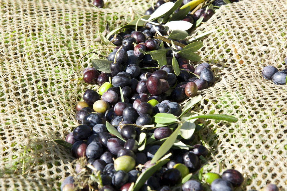 Half-day tour between art and olive oil Cascia Andante Tuscany